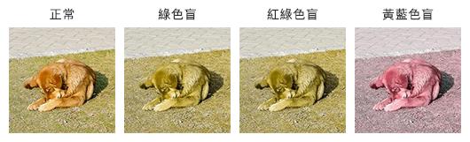 狗狗照片:由左至右分別模擬正常視力、綠色盲、紅綠色盲及黃藍色盲看到的照片成像。